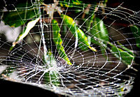 spider web gravity well