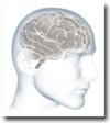 Brain20