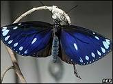 _42723195_afp_butterfly203_6